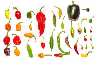 Capsicum chinense - Informationen zu Chilisorten